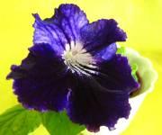 Moonlit Velvet