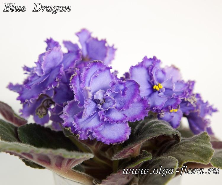Blue Dragon   (S. Sorano) - Страница 6 6upwiv2u2ys4ar7h4py01zppucaexf53