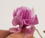 Lunar Lily - pink